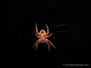 T J Dunn Photo Spider